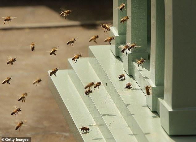 Χορευτικές κινήσεις που οι μέλισσες χρησιμοποιούν για να επικοινωνούν μεταξύ τους