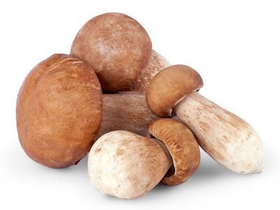 Oyster mushroom price in Hyderabad