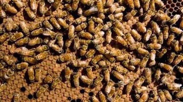 Χιλιάδες μέλισσες βρήκαν το θάνατο όταν... (βίντεο)