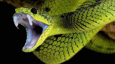 gigitan ular berbisa