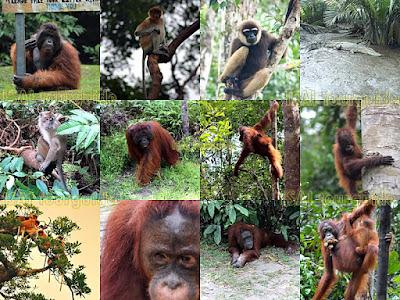 Taman Nasional Terbaik di Indonesia