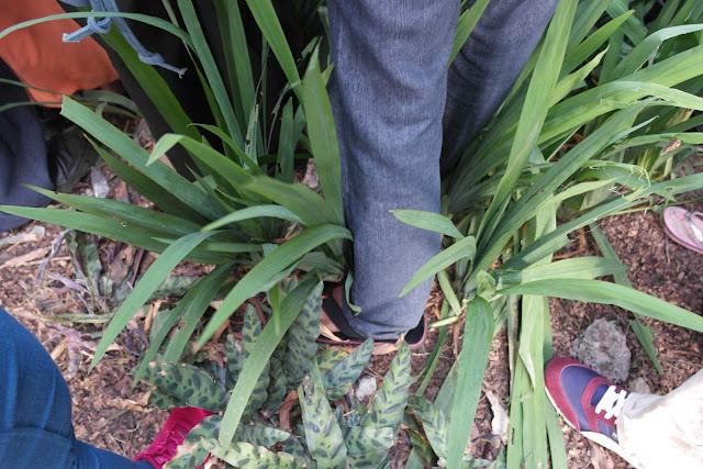 plants trampled