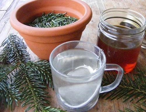 Weihnachtsbaum Kaufen Essen.Unkrautgourmet Pflanzen Essen Rezepte Und Mehr Weihnachtsbaum