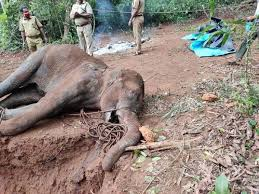 Pregnant Elephant in Kerala