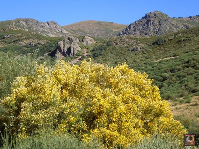 Cascada de Mazobre, Cardaño, Palencia