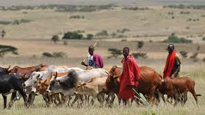 TRAGIC! Herdsmen Shot, Butcher Okada Rider In Delta