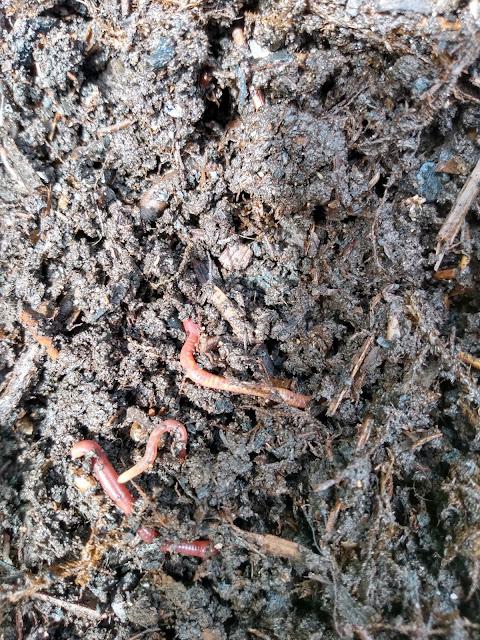 Hotbin compost sample