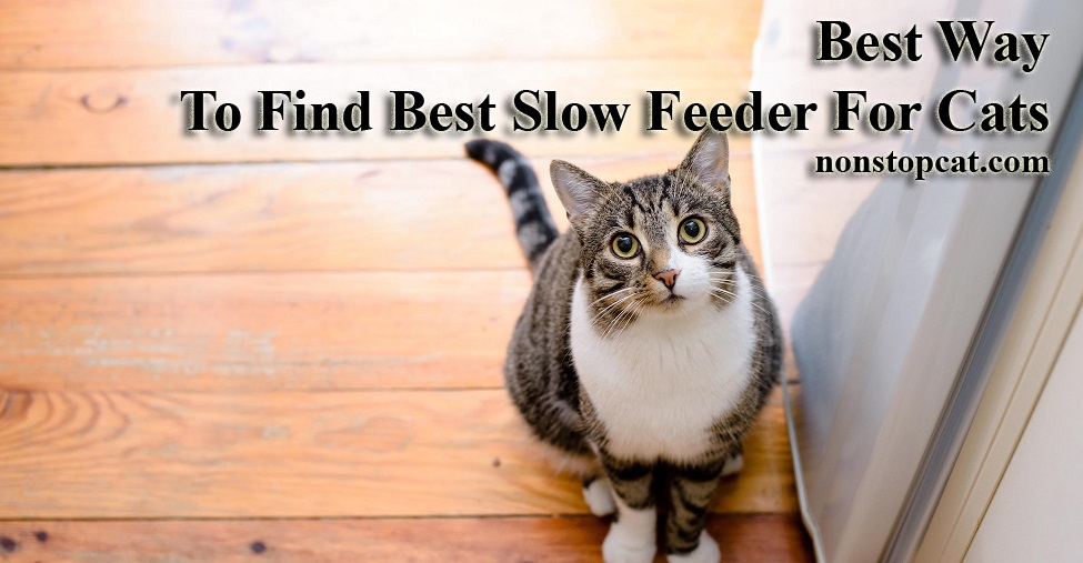 Best Way To Find Best Slow Feeder For Cats
