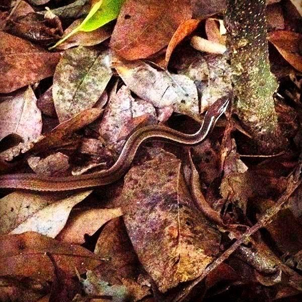 Una serpiente se desplaza por la selva. Los animales tienen la forma y el color de la tierra, forman parte de ellos, están hechos de lo mismo