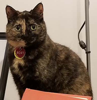 Recent picture of Roxy, a tortoiseshell cat with yellow-green eyes