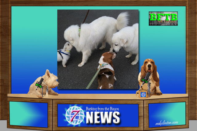 BFTB NETWoof News featuring two Great Pyrenees.