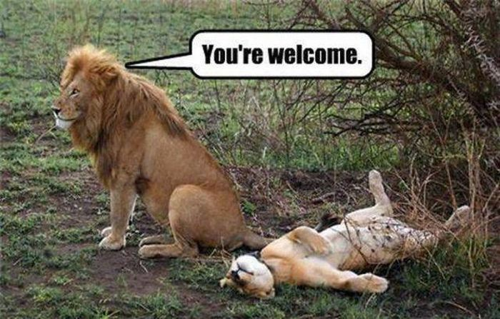 30 Funny animal captions - part 44, funny animal picture with captions, funny captioned pictures