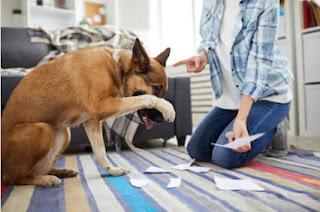 λαθη στην εκπαιδευση σκυλων