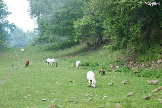 L'ampia area dove pascolano watussi, bisonti, yak al Parco Safari delle Langhe