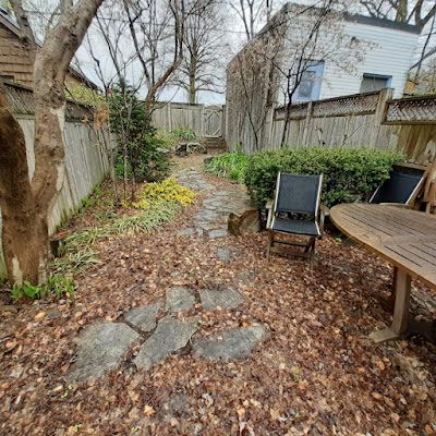 Riverdale Back Garden Spring Cleanup Before by Paul Jung Gardening Services--a Toronto Organic Gardener