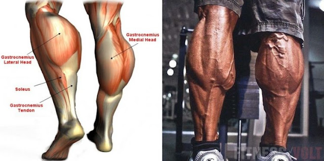 The Top 4 Exercises For Increasing Calf Mass