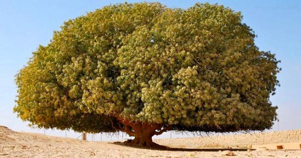 Pohon Sahabi