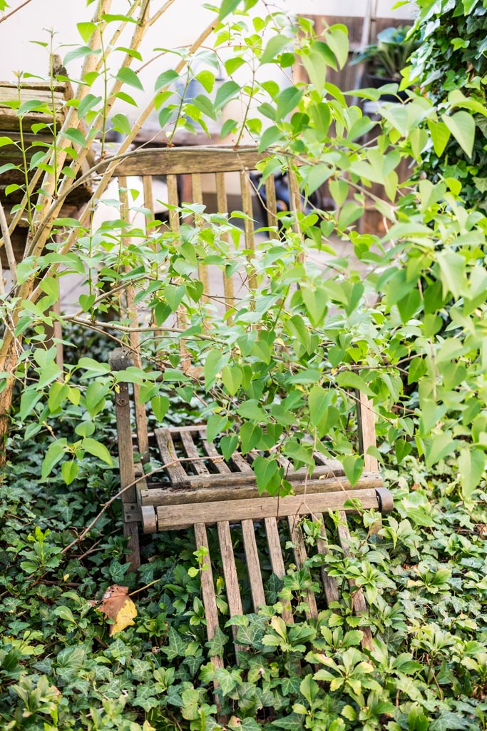 www.fim.works | Lifestyle-Blog | alter Gartenstuhl, Deckchair, wilder Wein, Fliederbaum