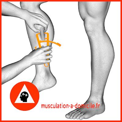 mesure mollet homme pince à plis cutanés adipomètre musculation fitness