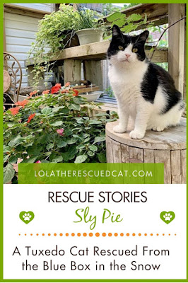Cat Rescue Stories|Chirpy Cats
