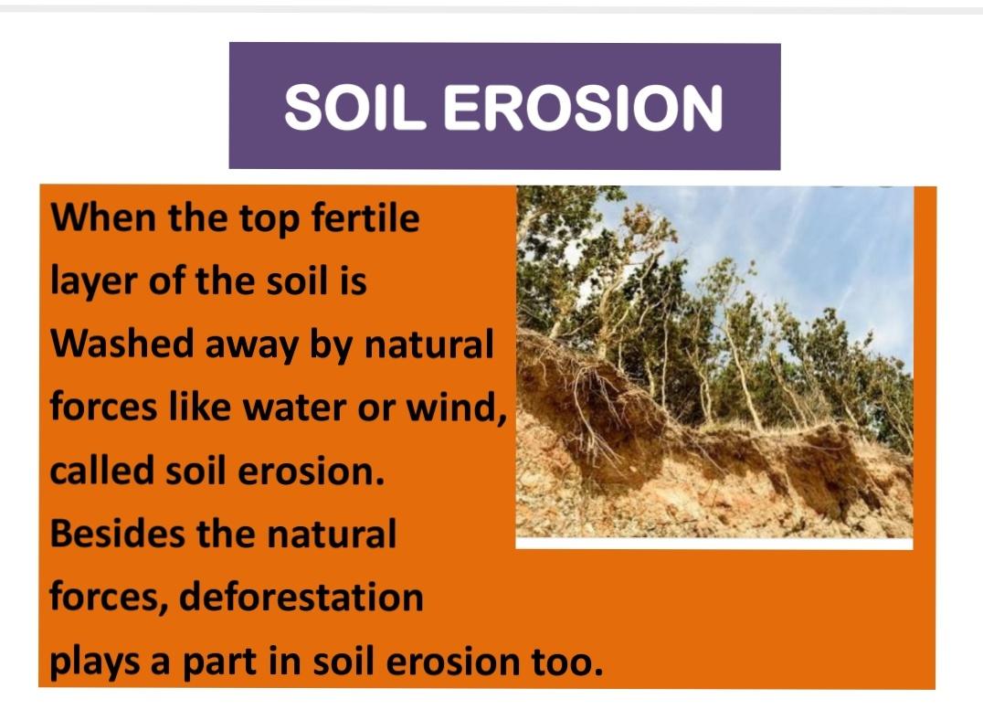 Pis Baroda Std 3 Evs 17 06 Chapter 2 Soil Virtual