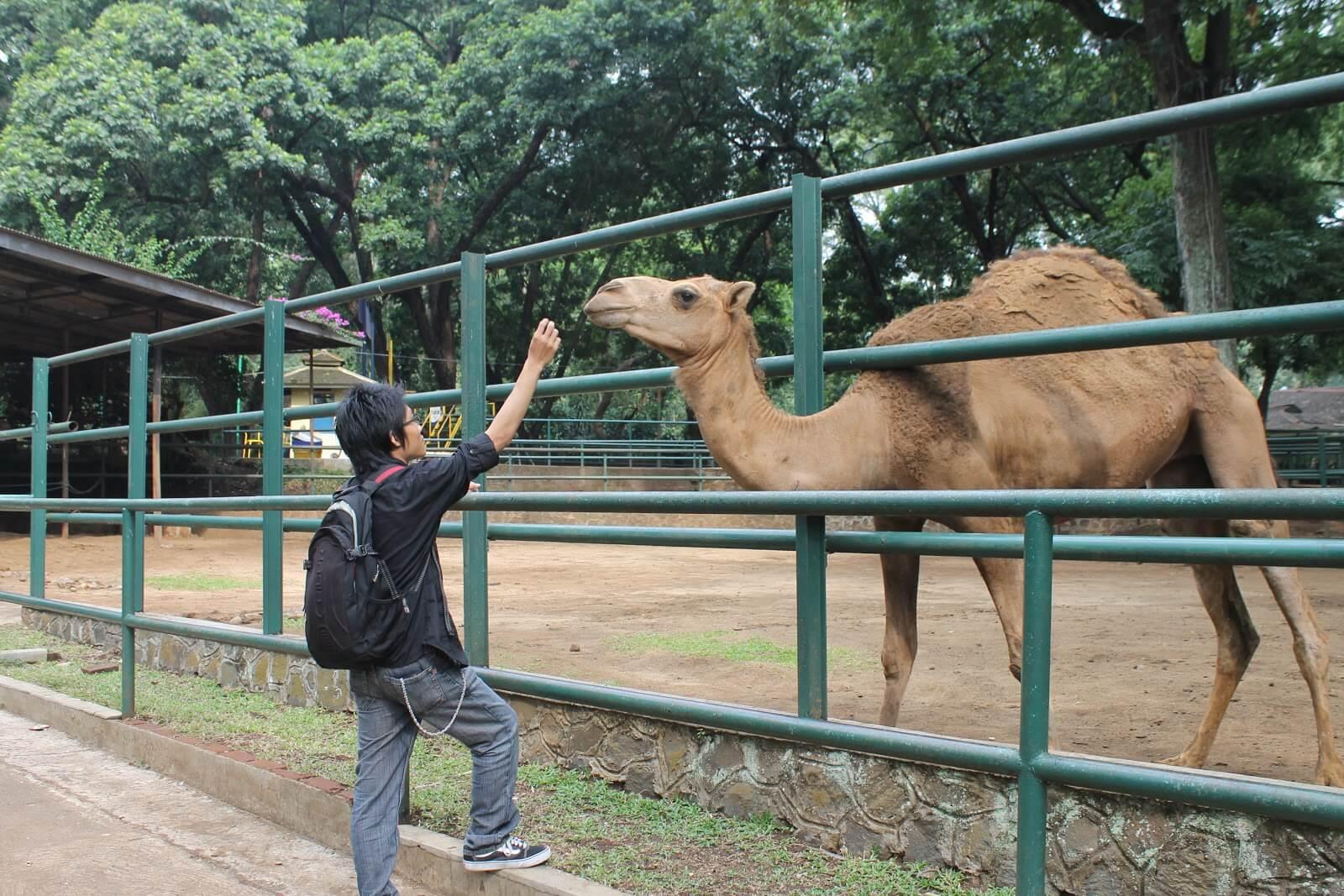 Rute Menuju Kebun Binatang Bandung
