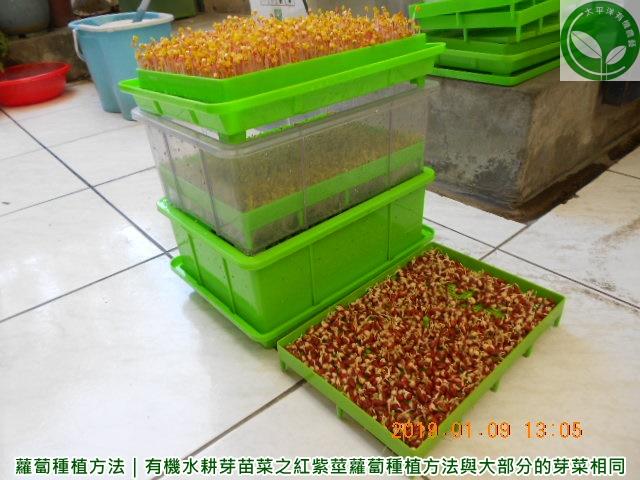 蘿蔔,蘿蔔葉,葉蘿蔔,蘿蔔籽,葉蘿蔔料理,蘿蔔種子,紫蘿蔔,葉蘿蔔食譜,蘿蔔種植方法,葉用蘿蔔種子
