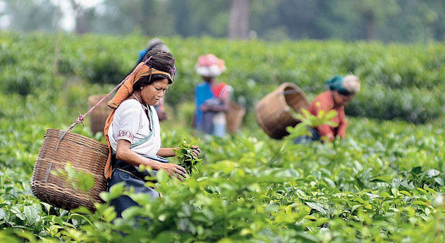 Financial packages for tea garden workers brew a poll issue in Darjeeling