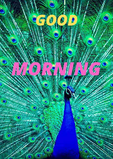 GOOD MORNING IMAGE WITH PEACOCK