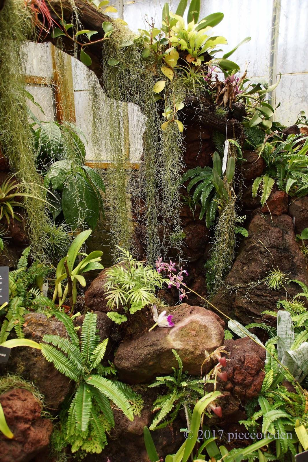 Sherman Garden\'s Lush Tropical Greenhouse