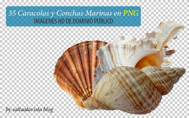 35_png_images_of_shells_and_seashells_by_saltaalavista_blog