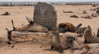 Leones marinos en Cape Cross