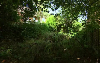 Kath's overgrown garden