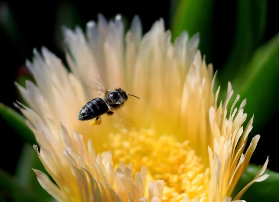 Canon EOS 700D Canon EF-S 18-135mm lens / Extension Tube f/5.6 ISO 100 Photo: Vernon Chalmers