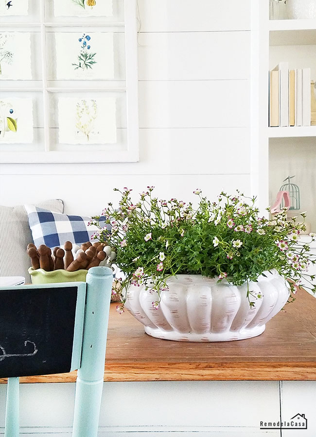 bowl planter on dinning table