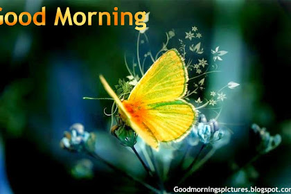 Bests Greetings Under Good Morning Beautiful Birds Hd Images