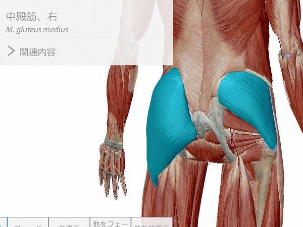体幹トレーニング 腰痛 整体