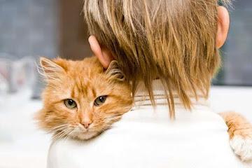 Как кошки лечат и отводят беду: факты и приметы