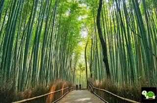 Kyoto Bersejarah