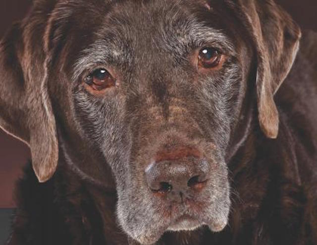 Could Your Dog Be A Senior?