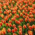 Nederland op weg naar nieuw milieubeleid