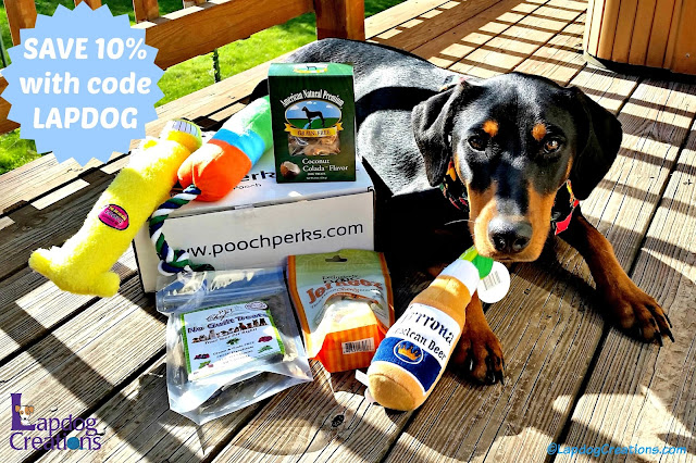 Penny thinks #PoochPerks box rocks!  She's been sipping on her Grrona and eating yummy treats. #DobermanPuppy #RescueDog #LapdogCreations ©LapdogCreations