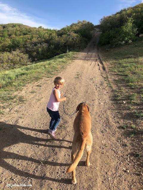 Hiking at the Deer Ridge Off Leash Area, draper utah trail