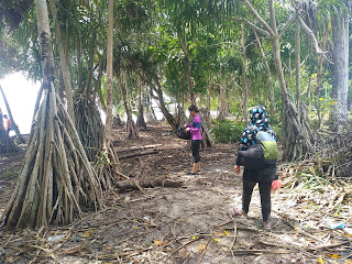 Spot mangrove mansinam