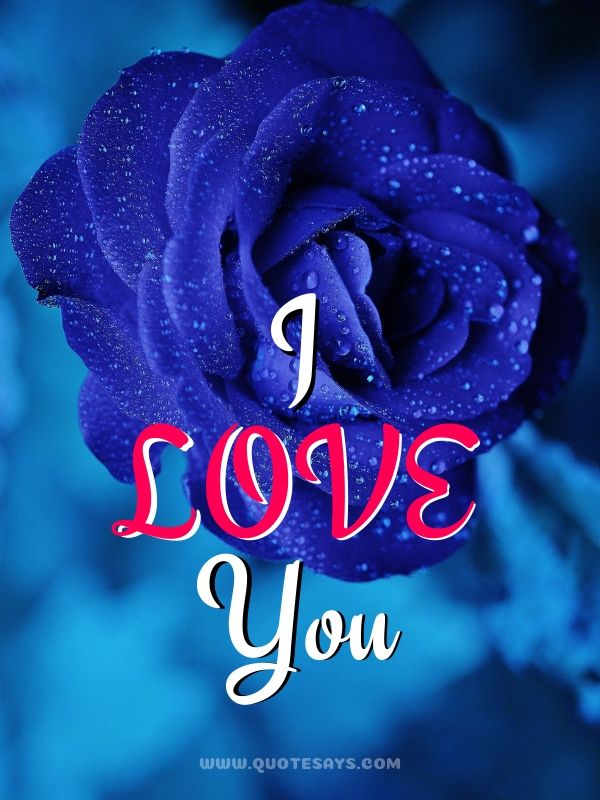 I Love You Images with Blue Rose