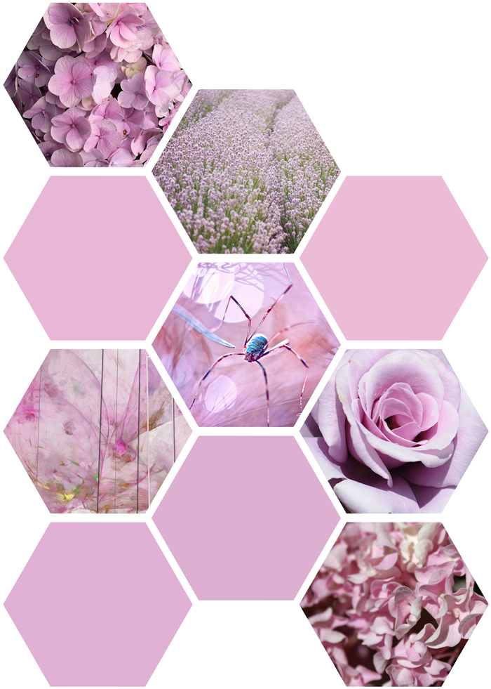 Color inspiration pin, purple, violet, rose, flowers, photography, nature, hydrangeas, spider, art