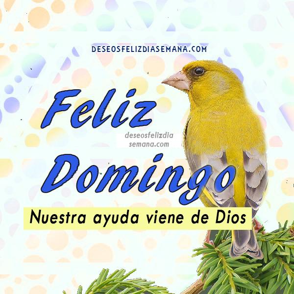 bonita imagen con pajaro y feliz domingo mensaje cristiano