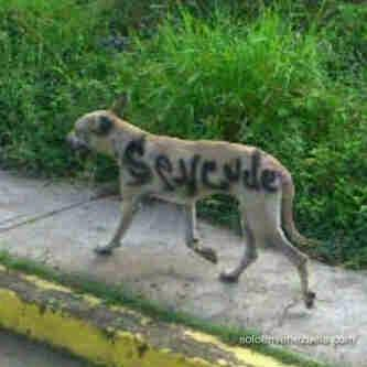 perro se vende