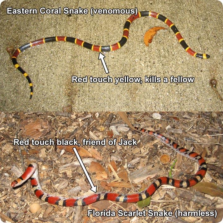 Rhyme and snake