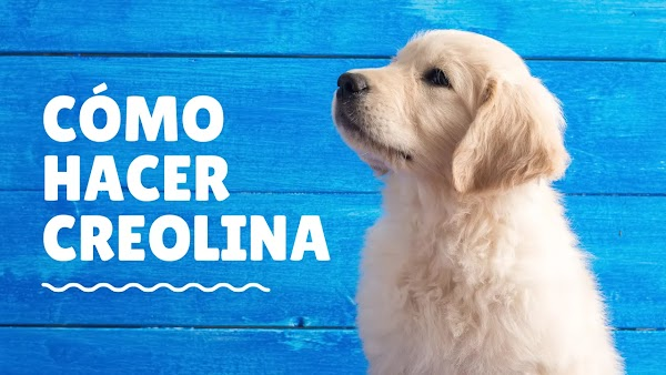 ▷ Fórmula para HACER CREOLINA Líquida✌️ | Para mascotas | Pisos | Otros
